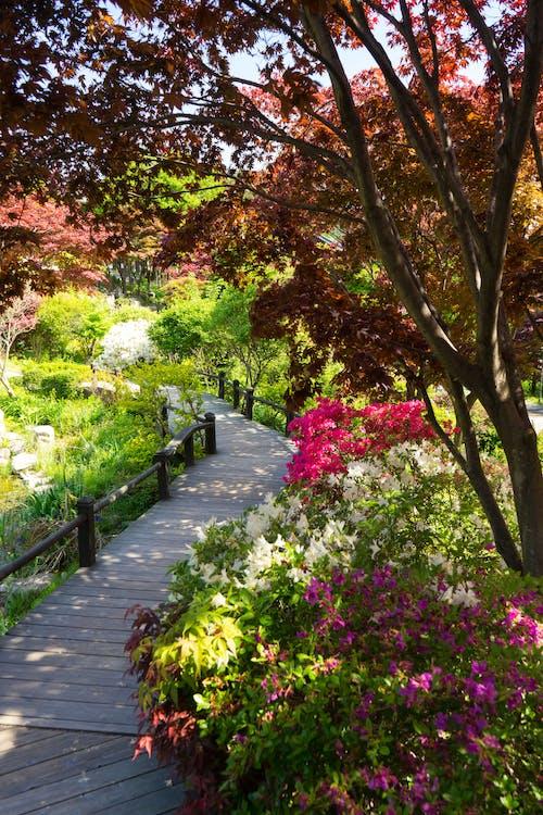 blommor, bro, röda blommor