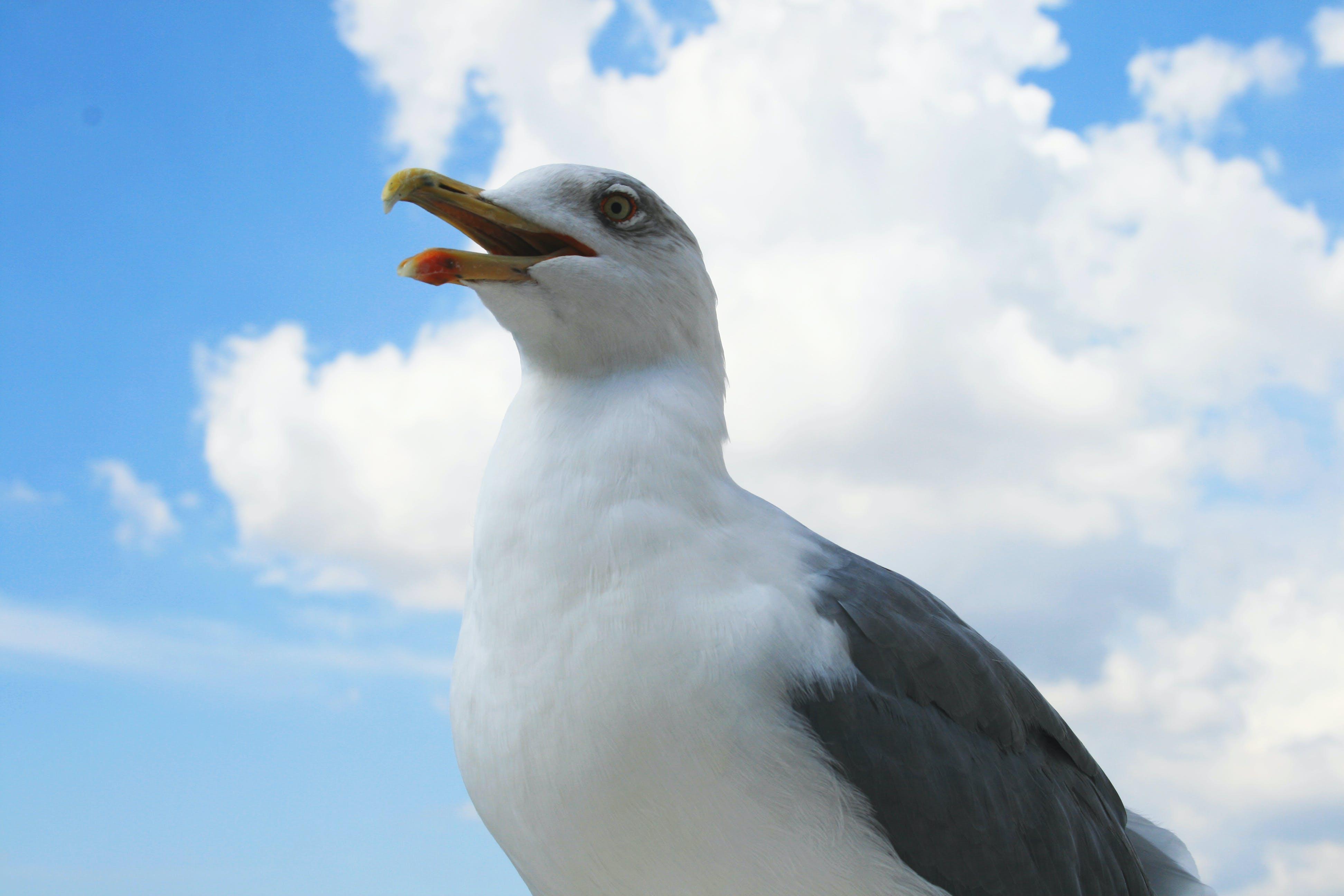 White and Grey Bird