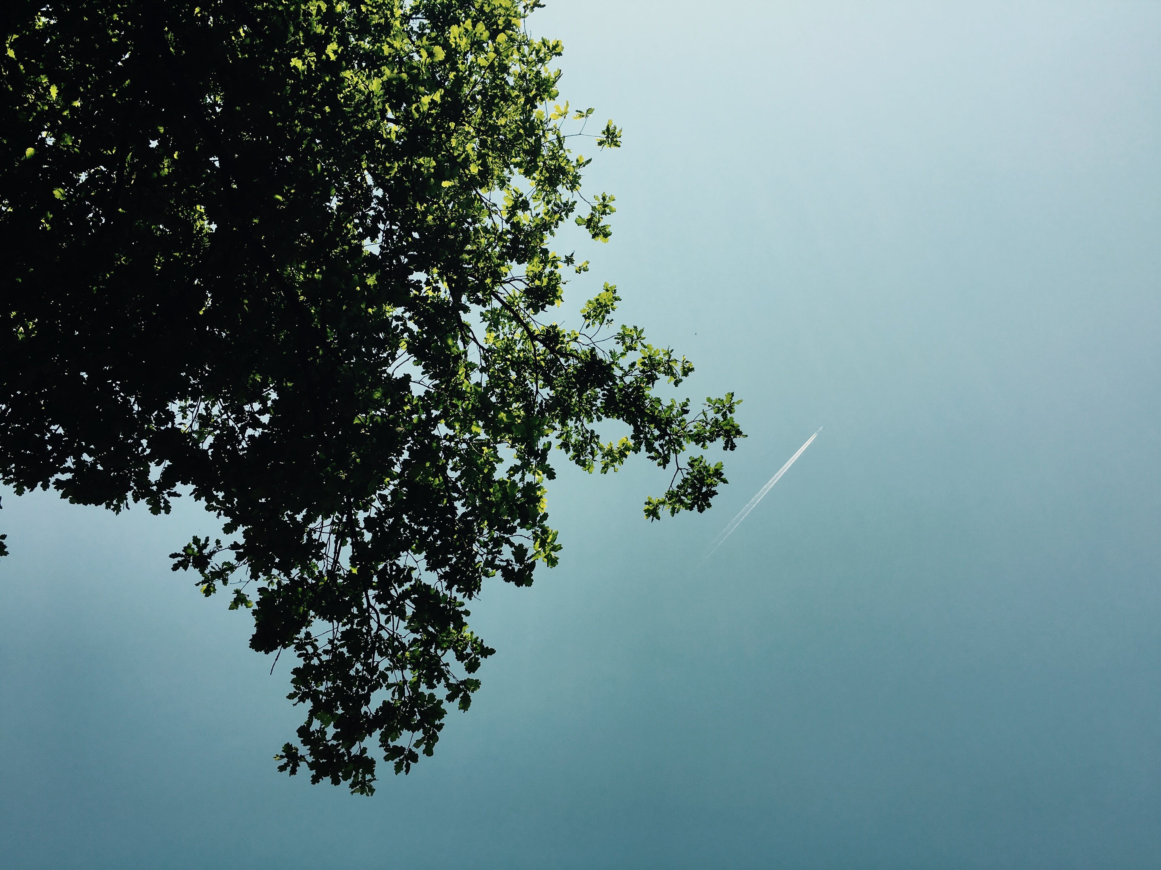 Green Leaf Tree on Low Angle Photography during Daytime