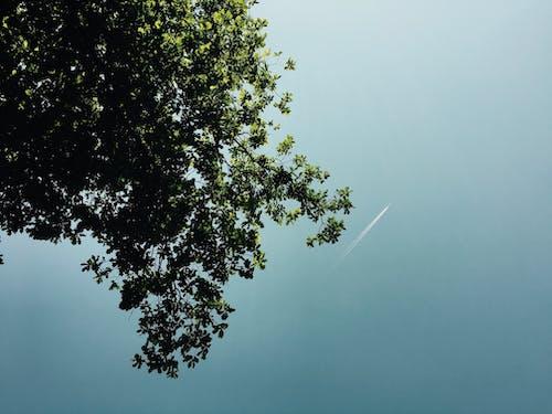 Foto d'estoc gratuïta de arbre, cel, deixants de condensació, natura