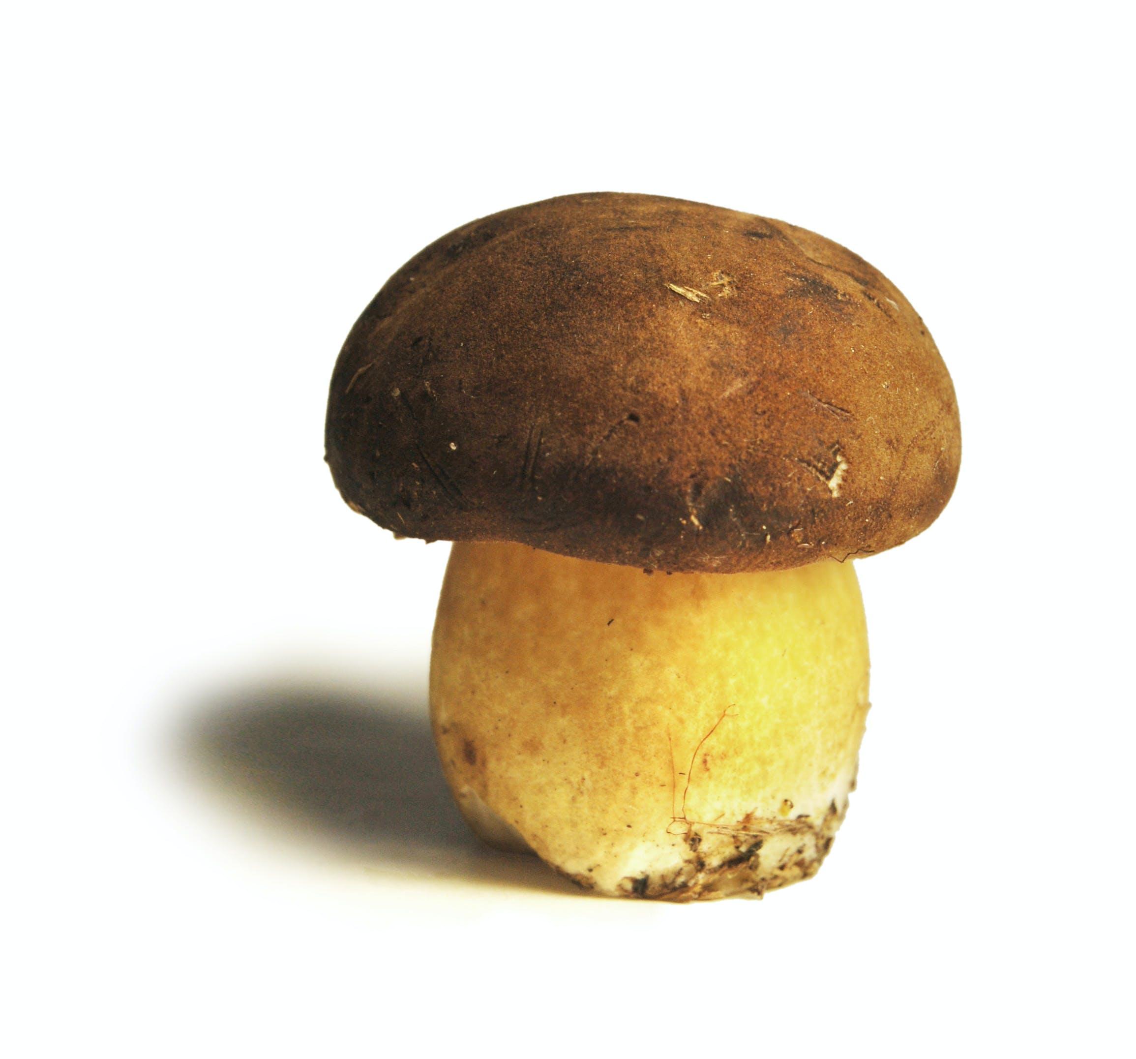 Gratis stockfoto met boleet, close-up, eten, paddenstoel
