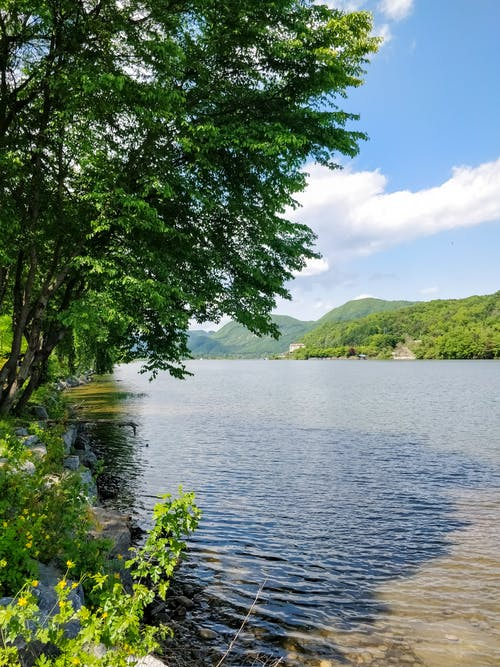 Foto d'estoc gratuïta de arbres, cel blau, cel ennuvolat, hdr