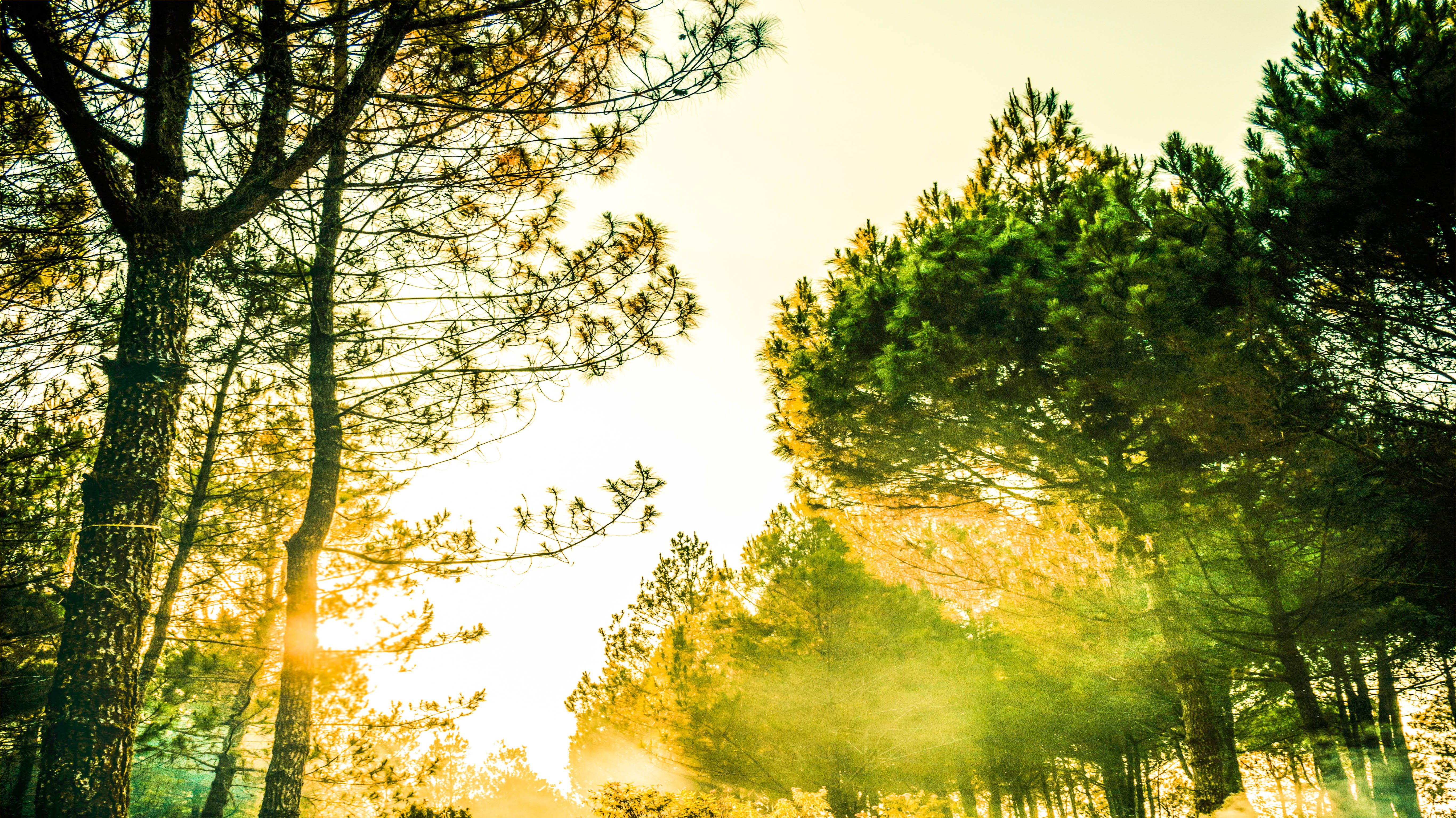 Green Trees during Golden Hour Photography