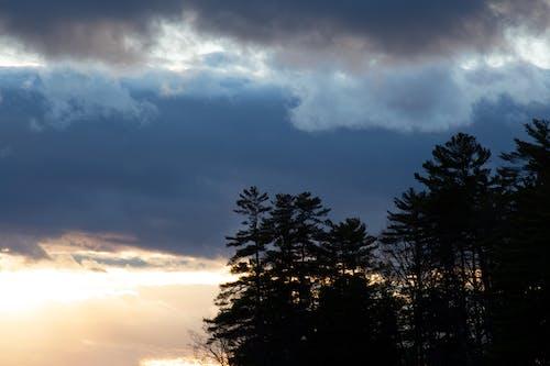 Darmowe zdjęcie z galerii z chmury, ciemny, drzewa, drzewo