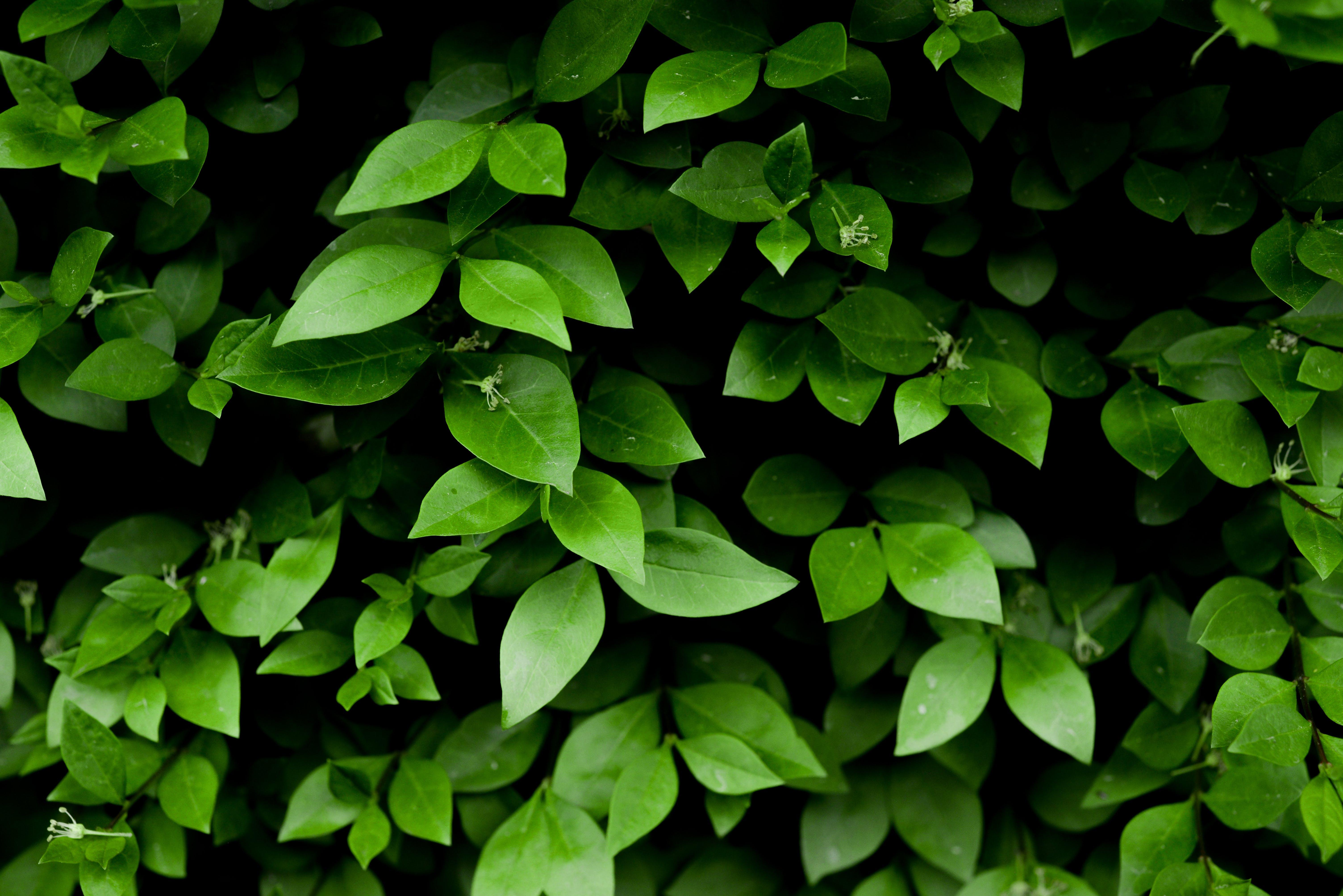 Kostenloses Stock Foto zu blätter, draußen, flora, garten