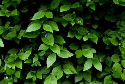 Photo of Green Leafy Plant