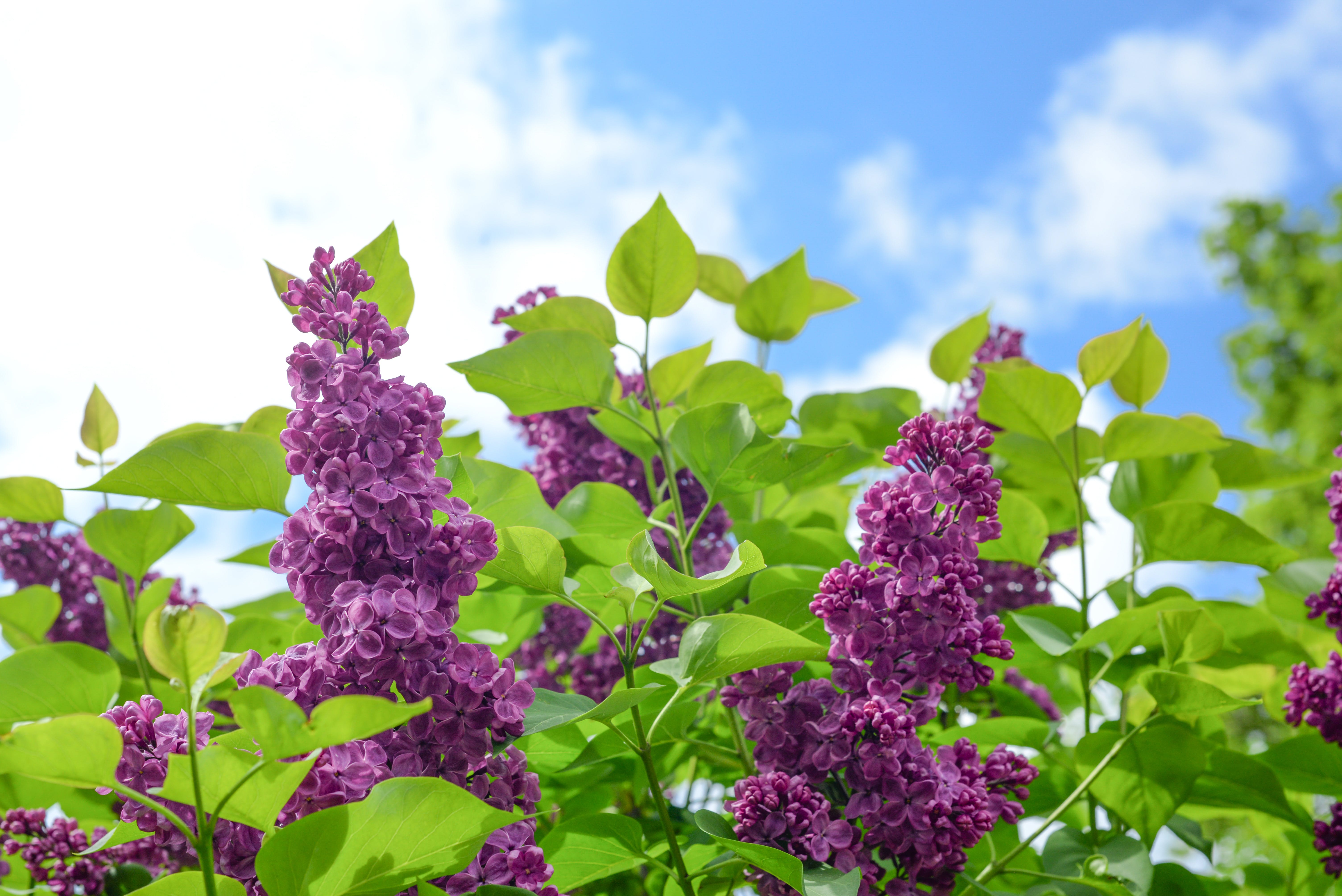 Selective Focus Photo of Purple Cluster Flower at Daytime