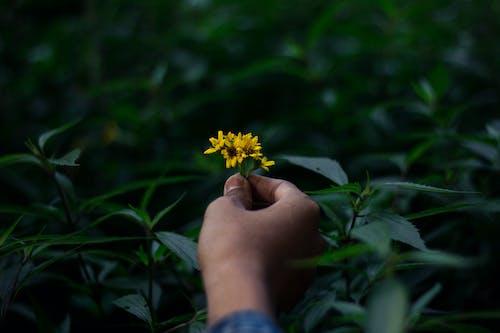 Základová fotografie zdarma na téma aranžování květin, dešťový prales, HD tapeta, romantika