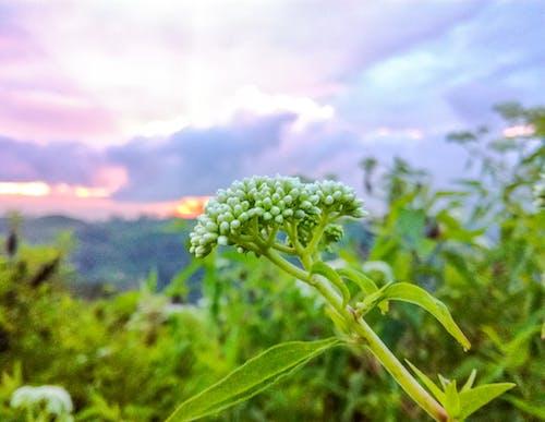 傍晚的天空, 美麗的花朵 的 免费素材照片