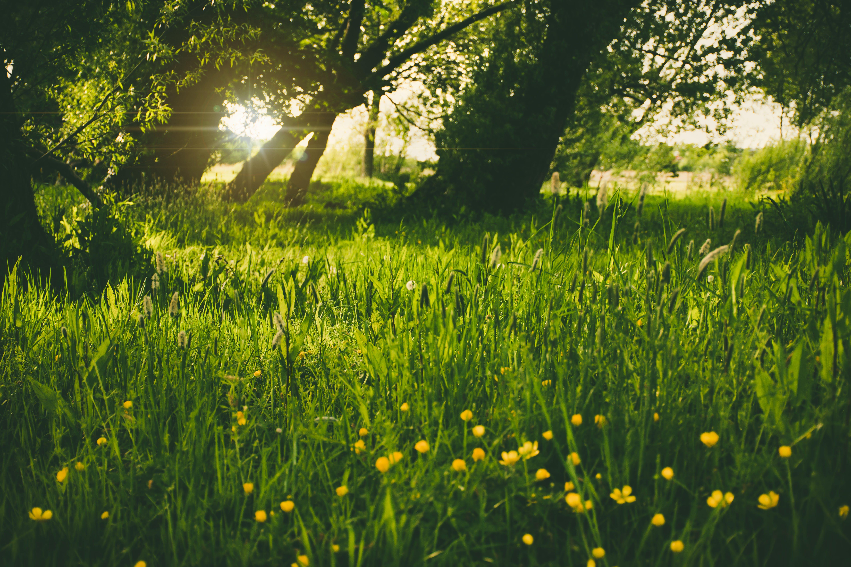 Безкоштовне стокове фото на тему «квіти, квітка, поле, Природа»