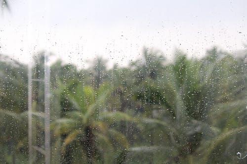 Free stock photo of coconut tree, rain
