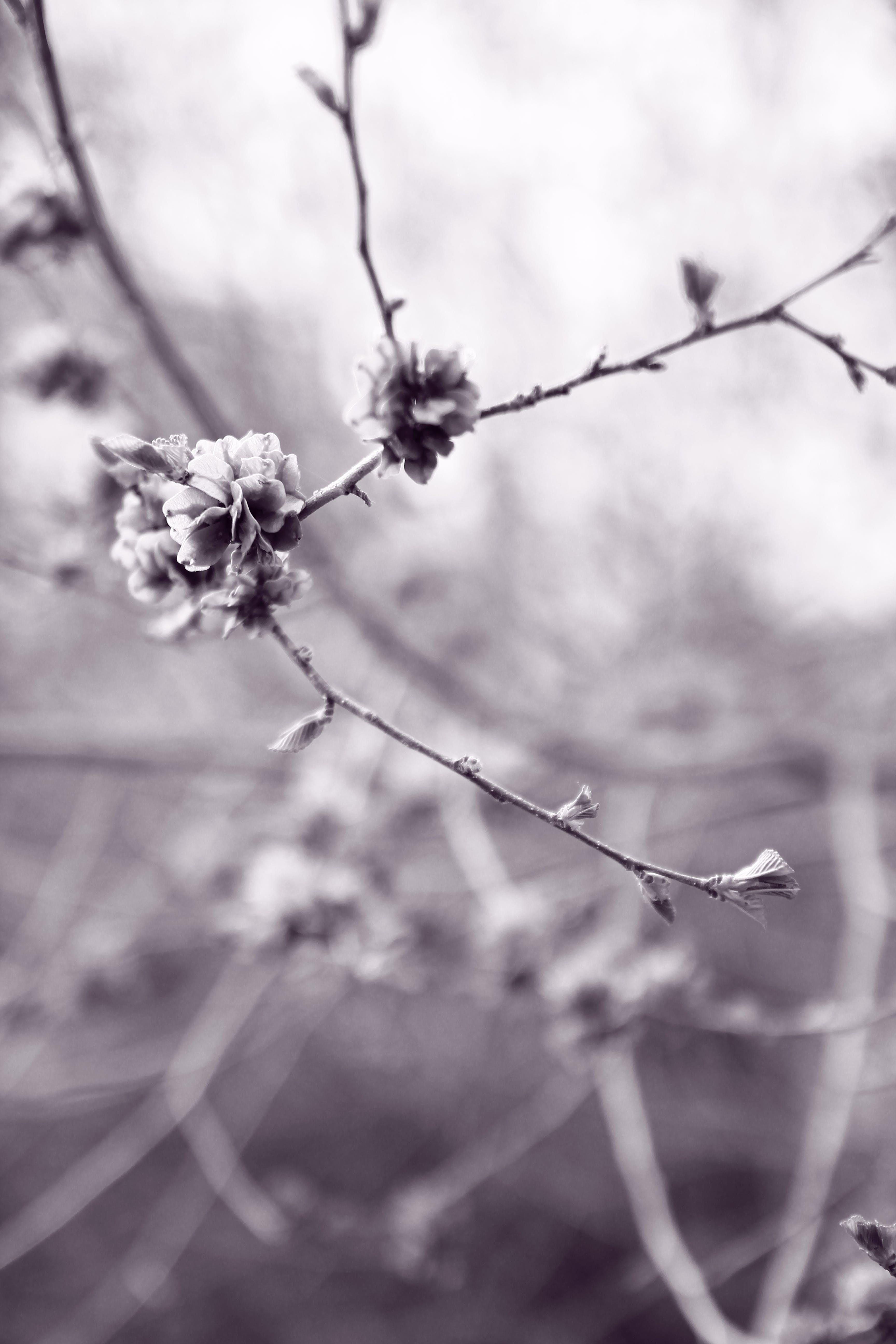 Δωρεάν στοκ φωτογραφιών με άνθη, βλαστάρια, εστιάζω, Καναδάς