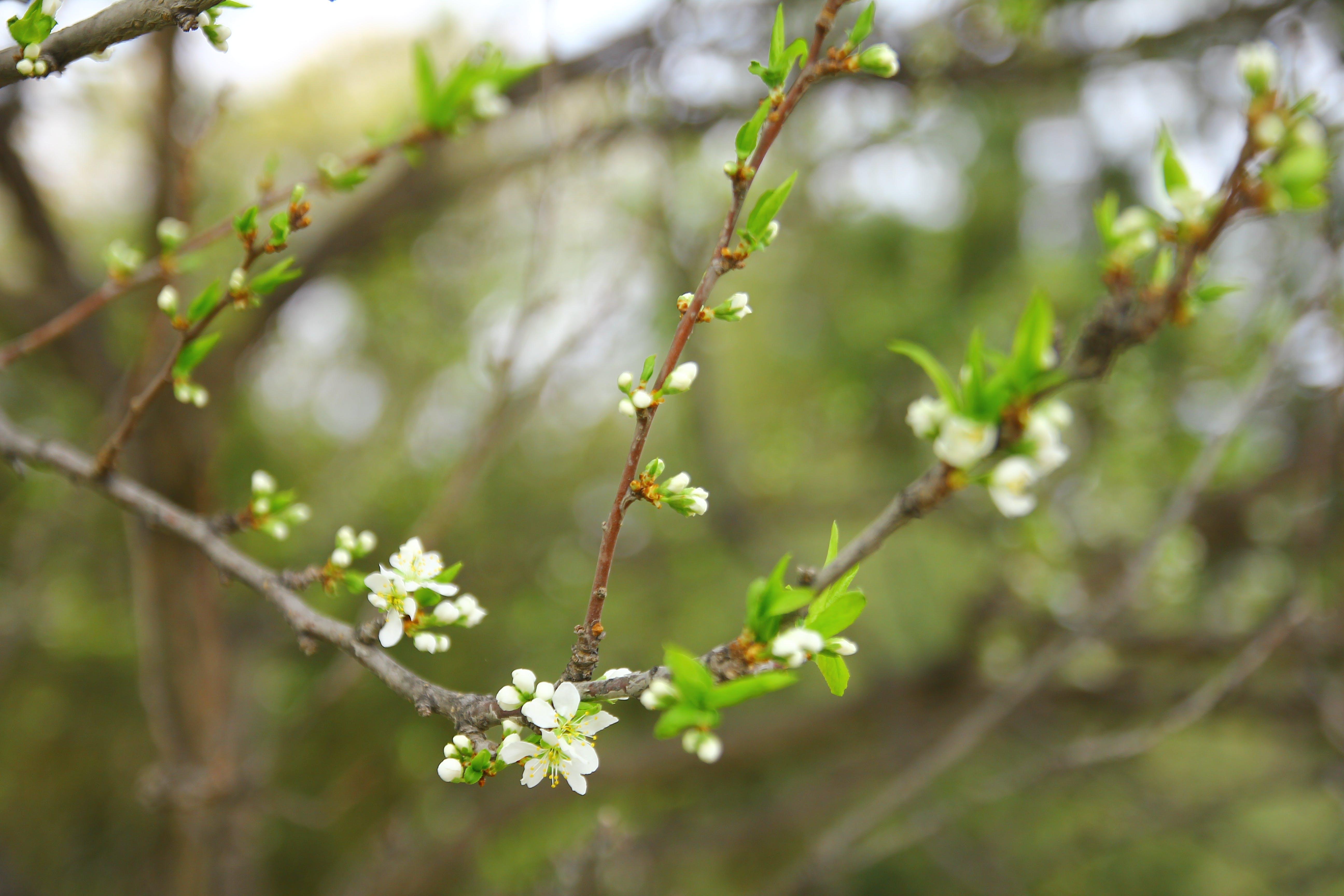 Foto profissional grátis de árvore, baseado, broto, filial