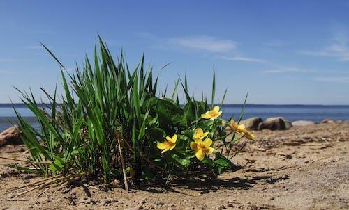 Gratis stockfoto met aarde, bloeien, bloemen, bloesem