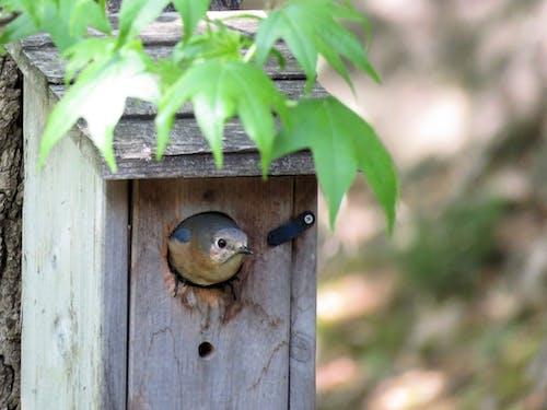 Fotos de stock gratuitas de anidando, azulejo, casa para aves, chicle dulce