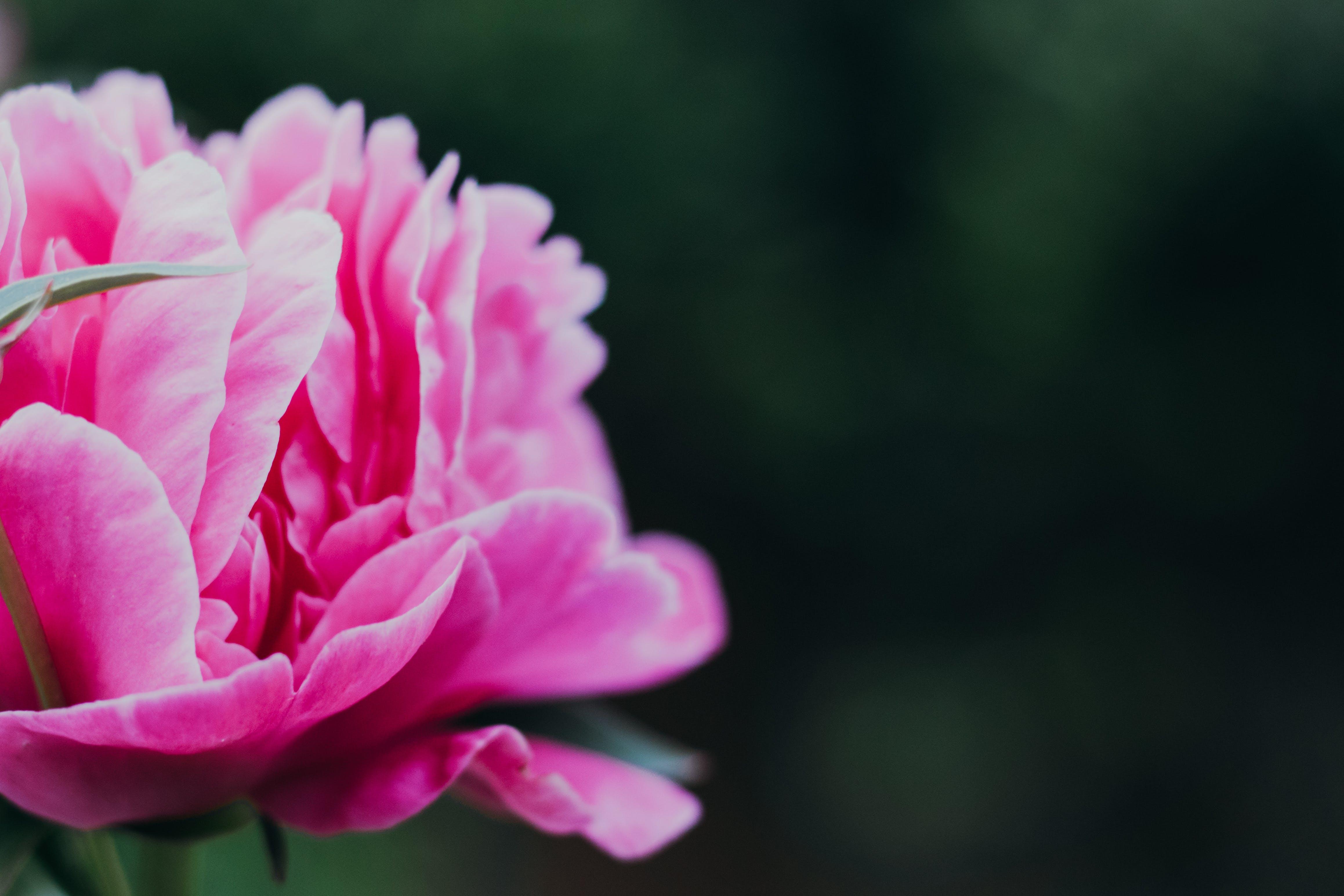 floral, flower, fresh