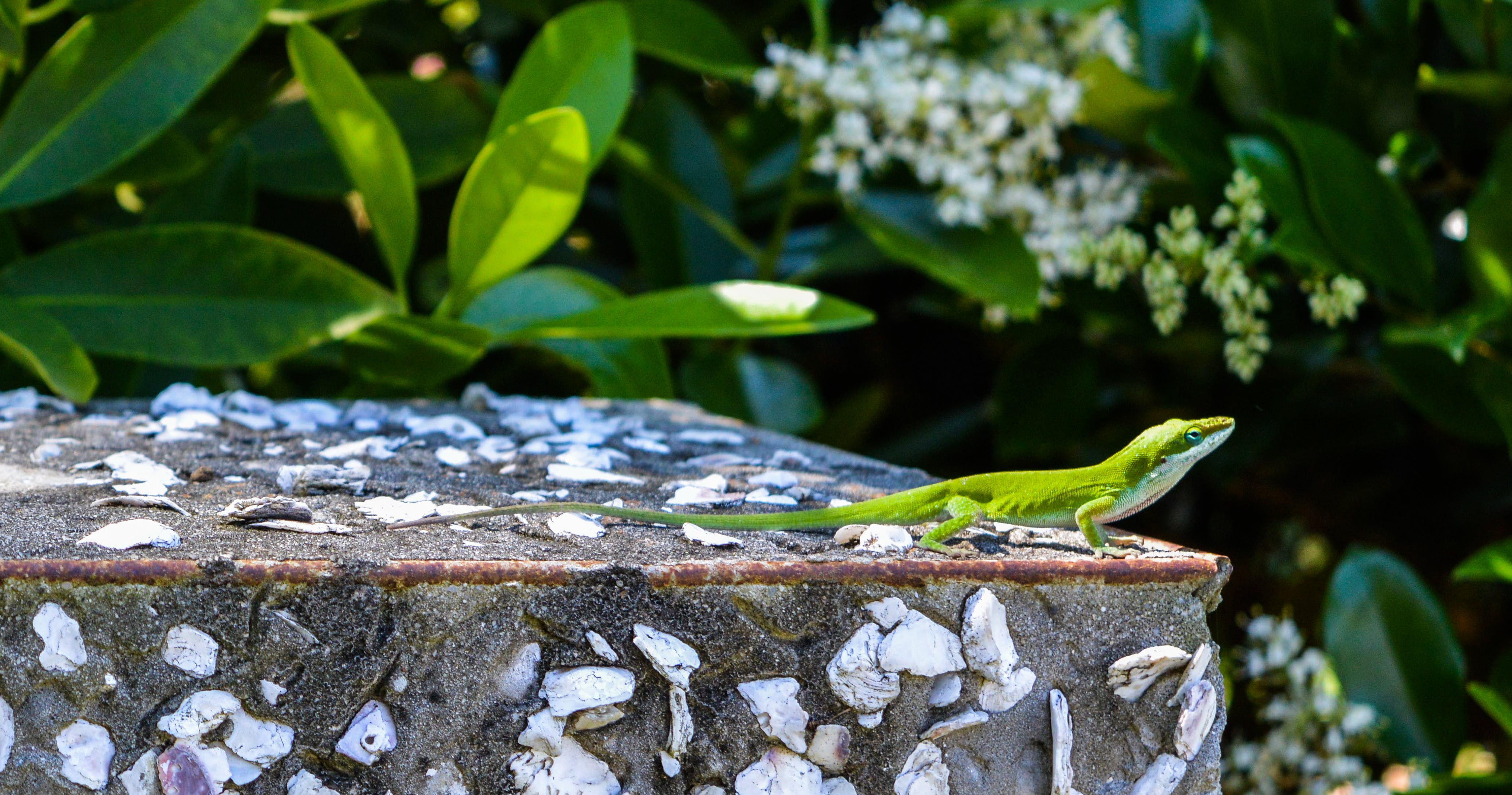 Green Lizard on Top of Gray Surface