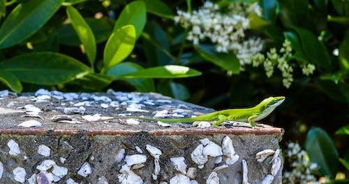 Foto d'estoc gratuïta de aigua, animal, arbre, color