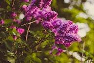 flowers, summer, shrub