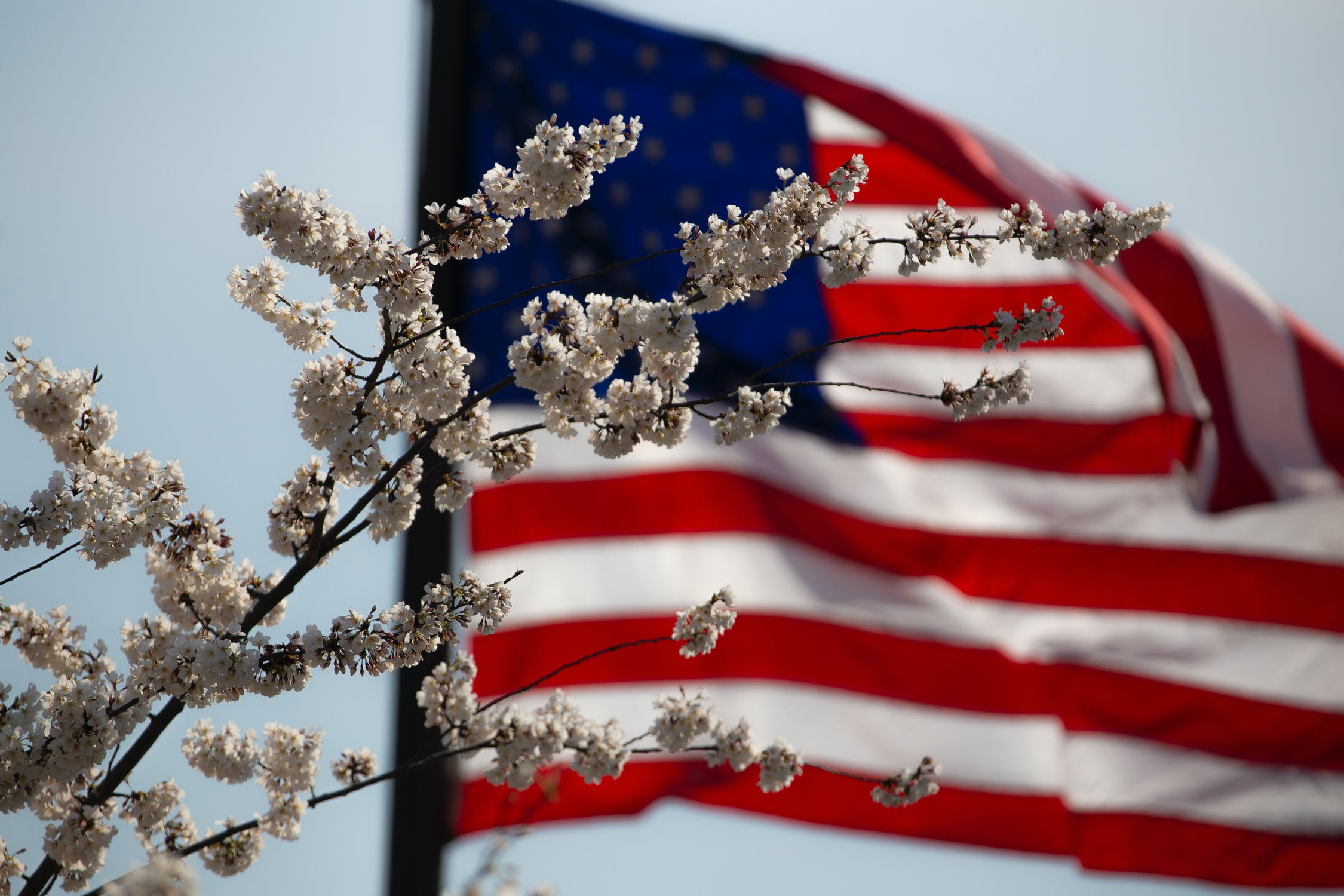 A picture of flowers with the American flag in the background