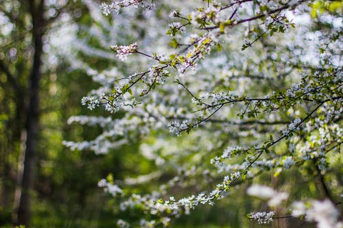 フラワーズ, フローラ, 咲く, 自然の無料の写真素材