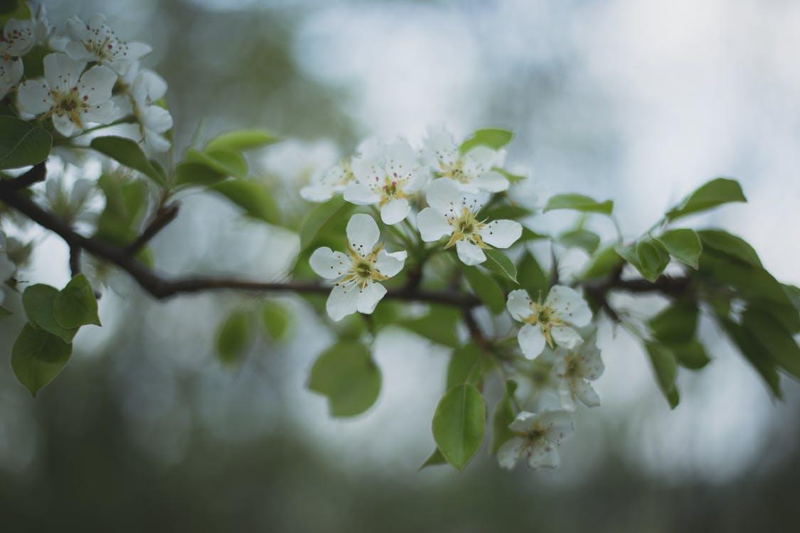 årstid, blomst, blomster