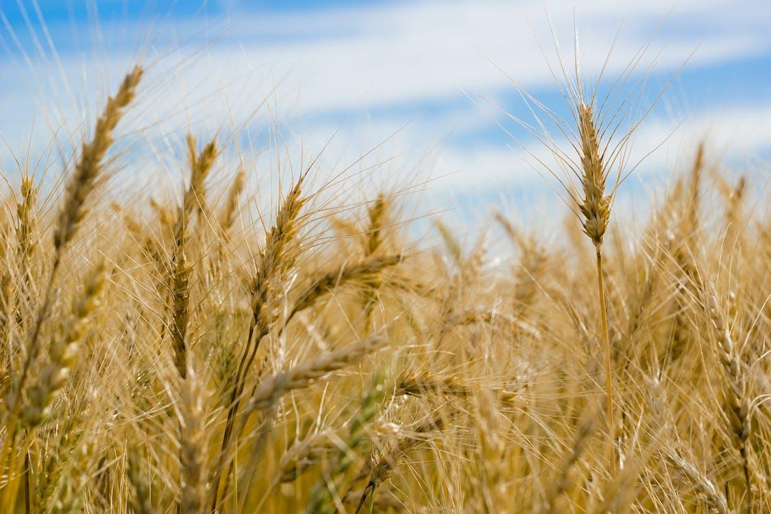 зерновые, на открытом воздухе, облака
