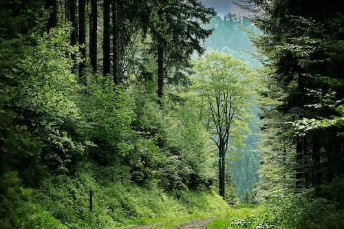 Gratis stockfoto met bergen, bomen, Bos, bospad