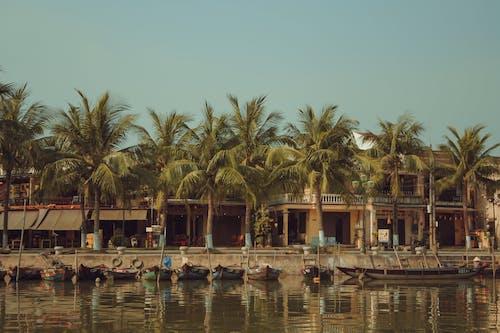 ộan, 中午, 椰子樹, 河邊 的 免费素材照片