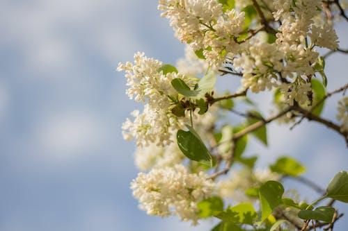 Gratis lagerfoto af blomst, lyslilla, springe ud