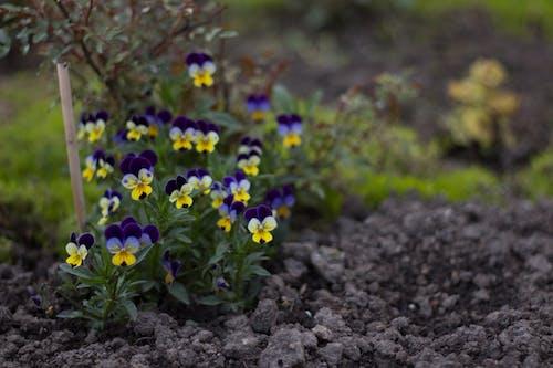 Gratis lagerfoto af blomst, have