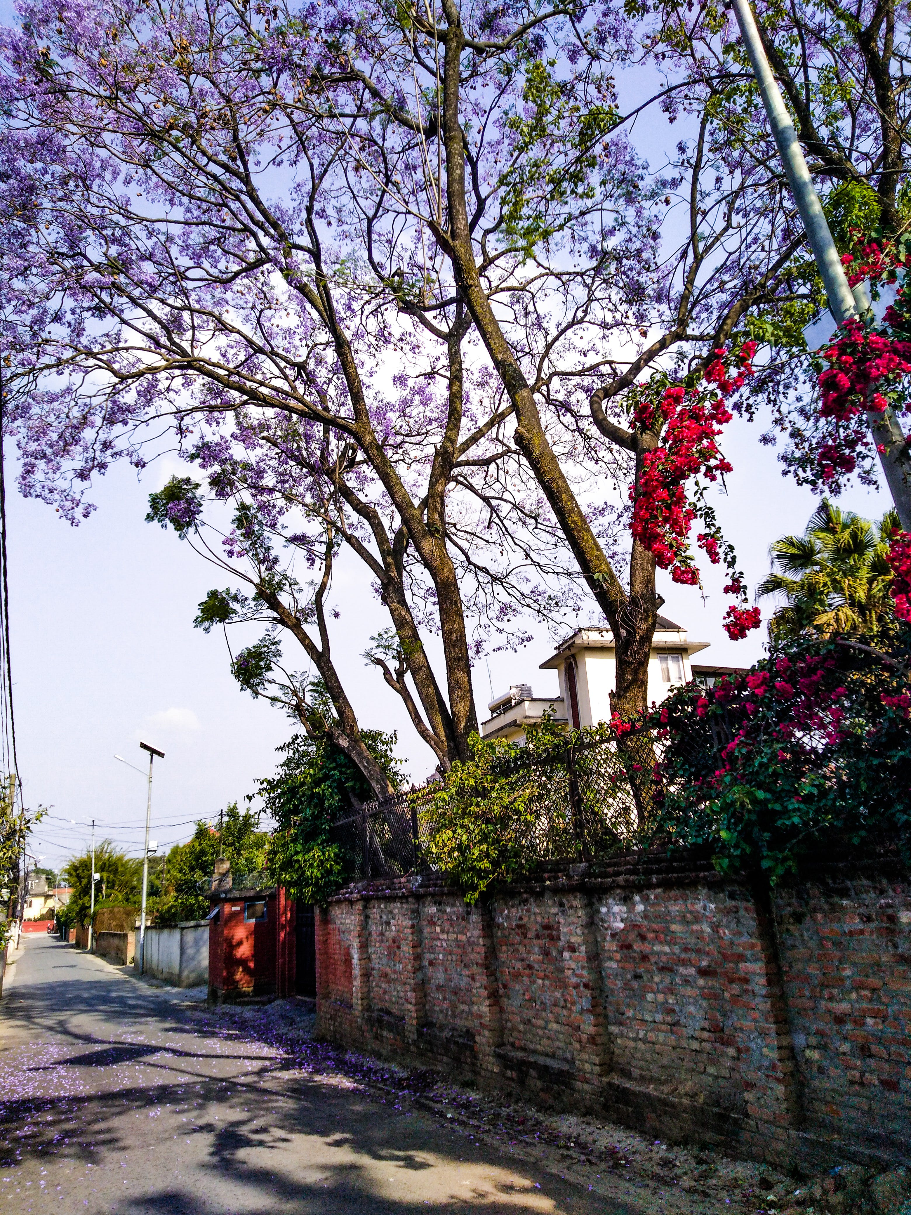 Free stock photo of blue flowers, lalitpur, patan, red flowers