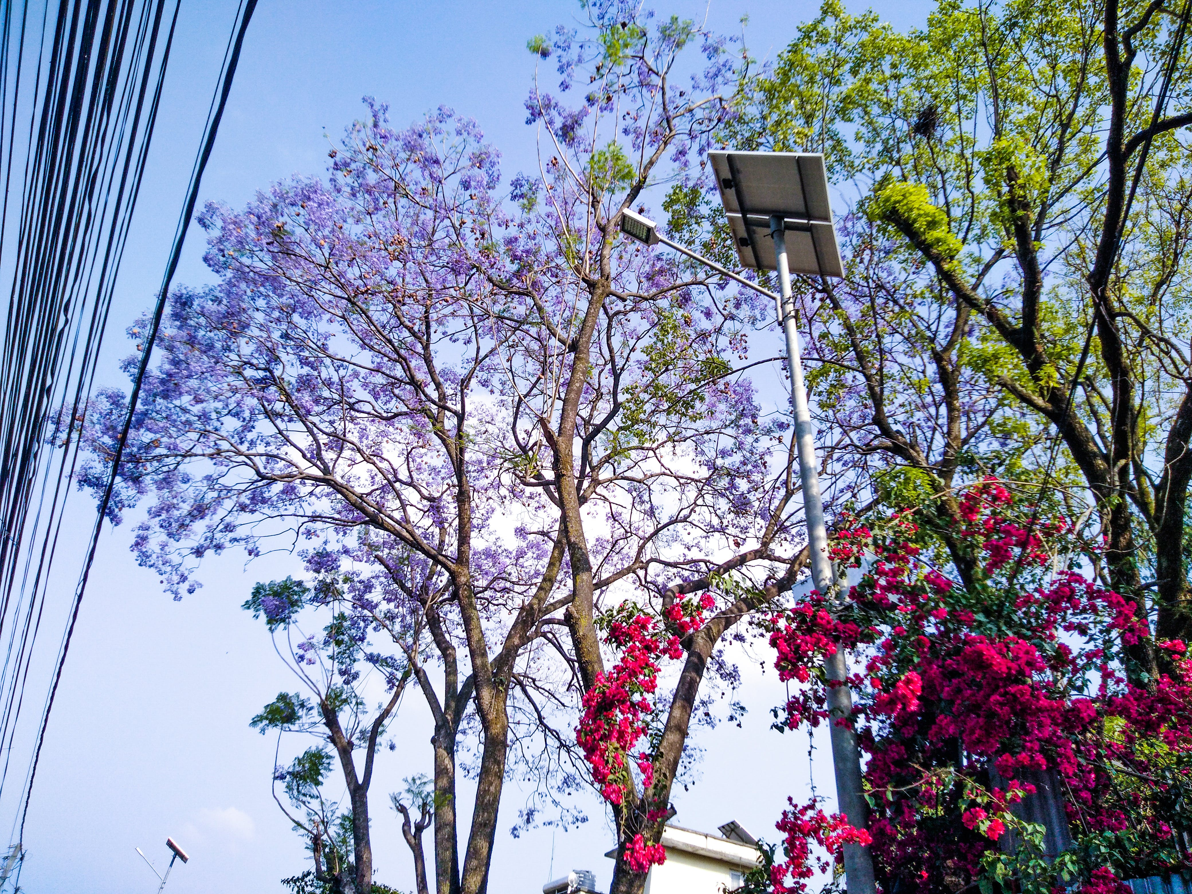 Free stock photo of blue flowers, red flowers, solar, street light