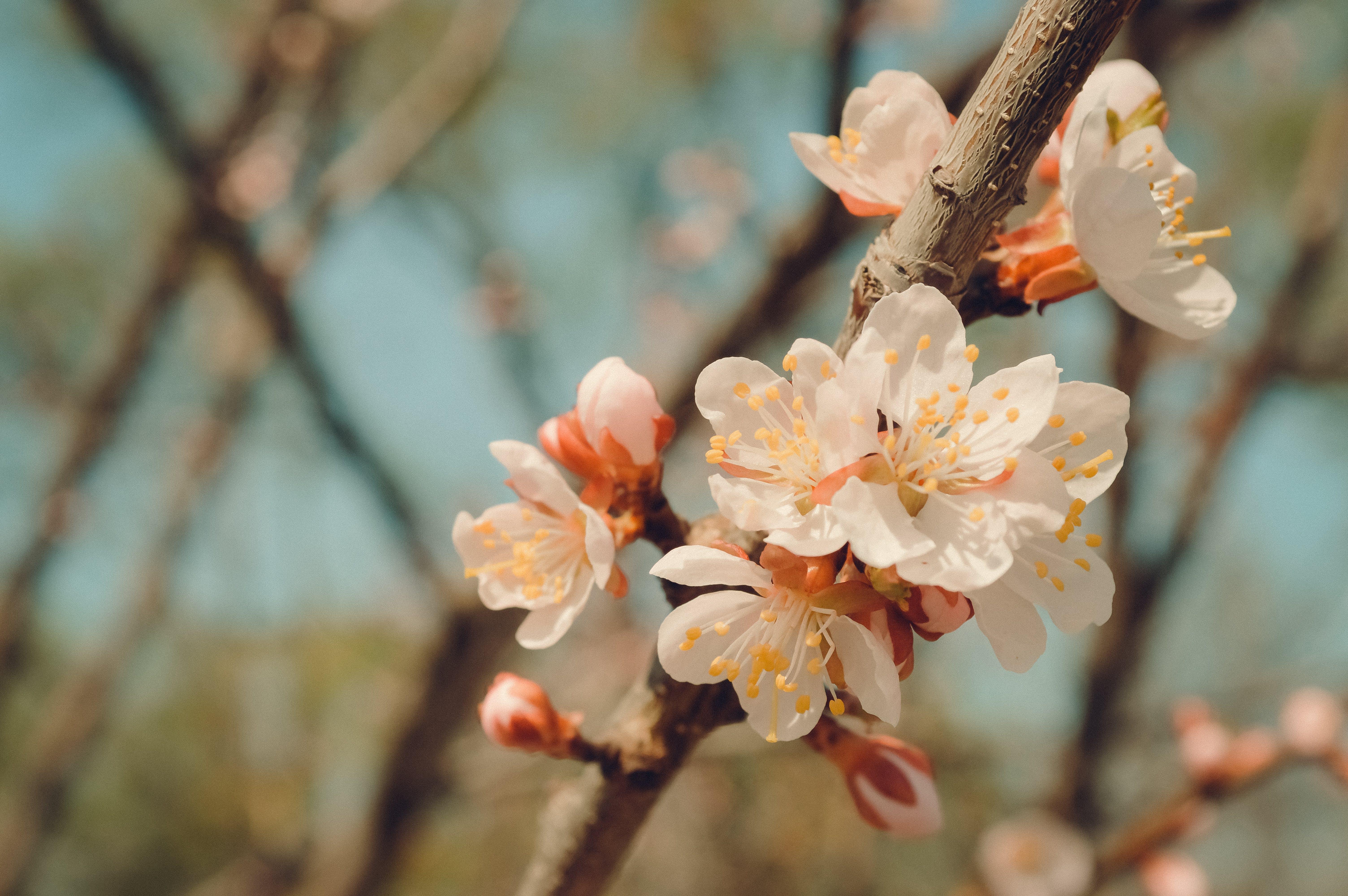 Immagine gratuita di albero, colore, crescita, fiori