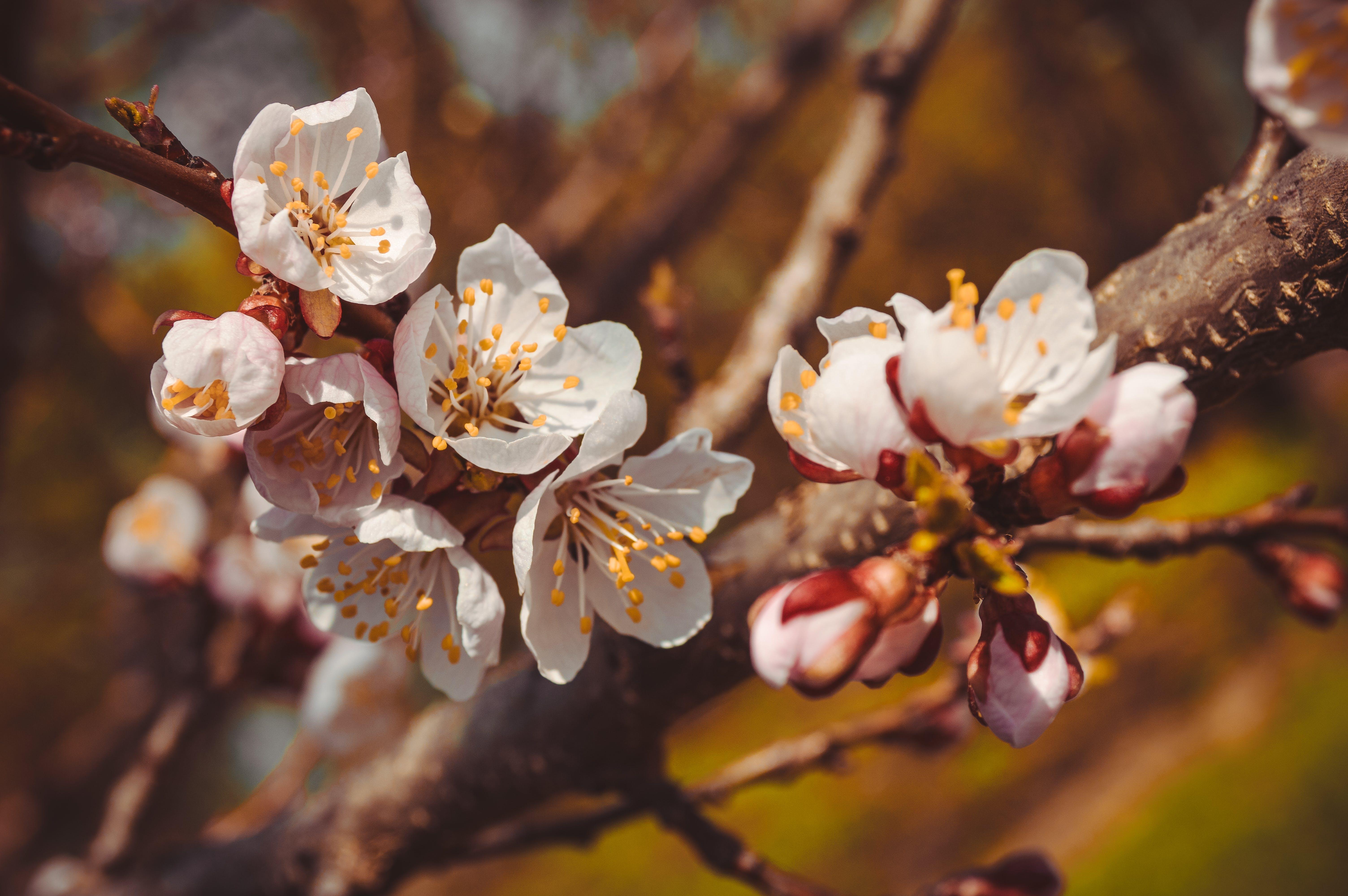 Tilt-shift Lens Photo of White Flowers