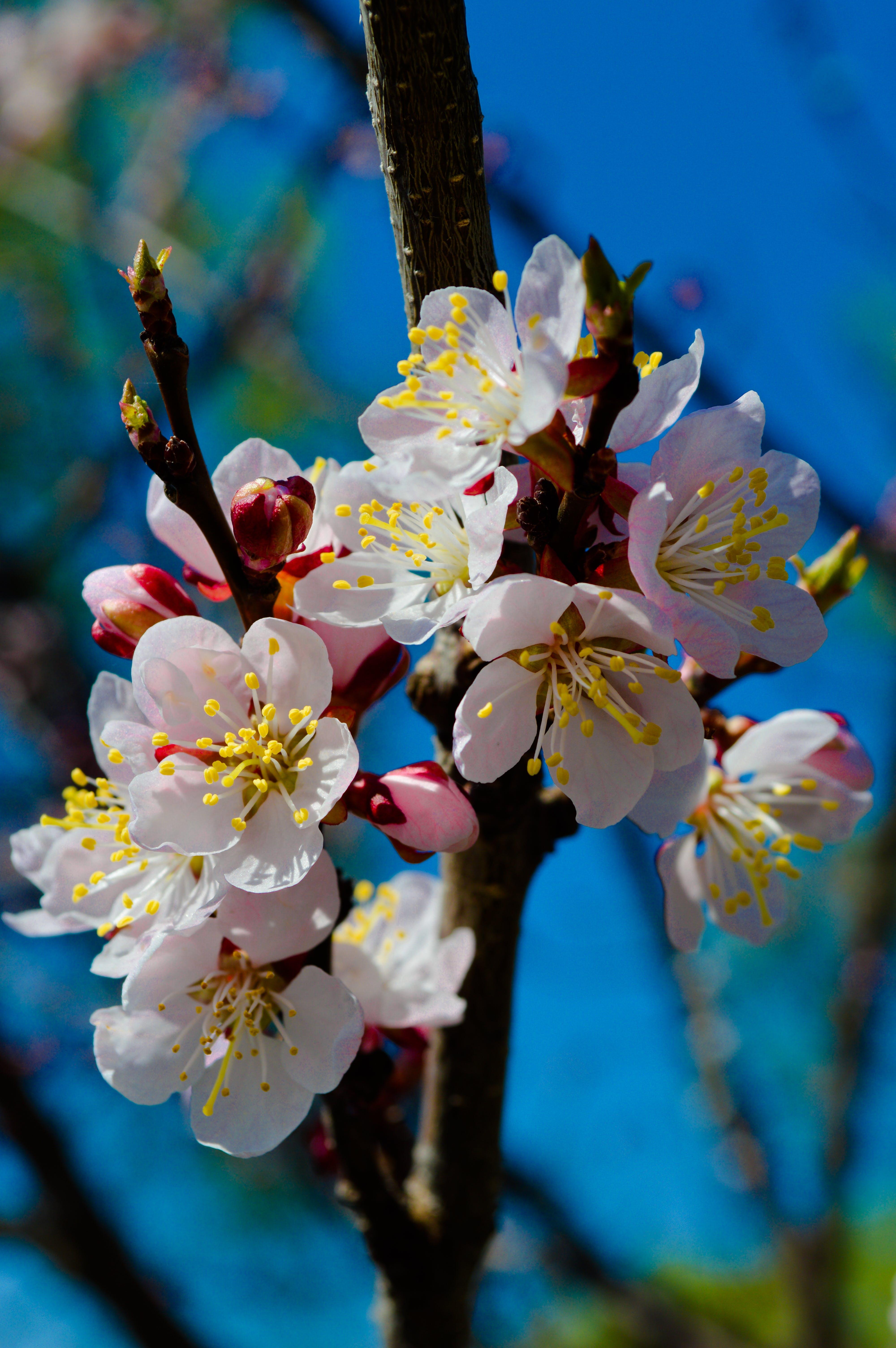 Free stock photo of цветы, ветка, крупный план