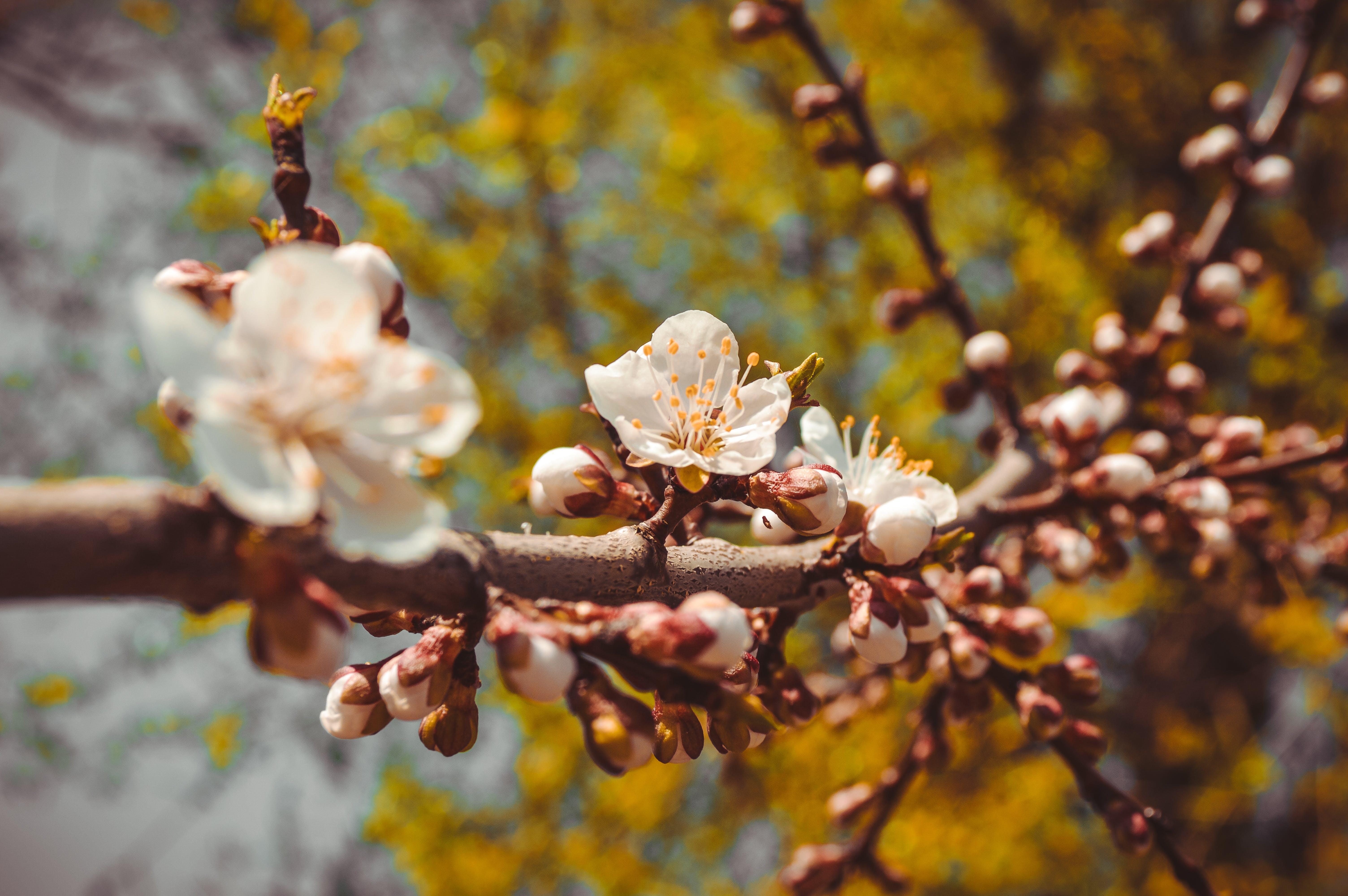 Kostnadsfri bild av blommor, blomning, färg, gren