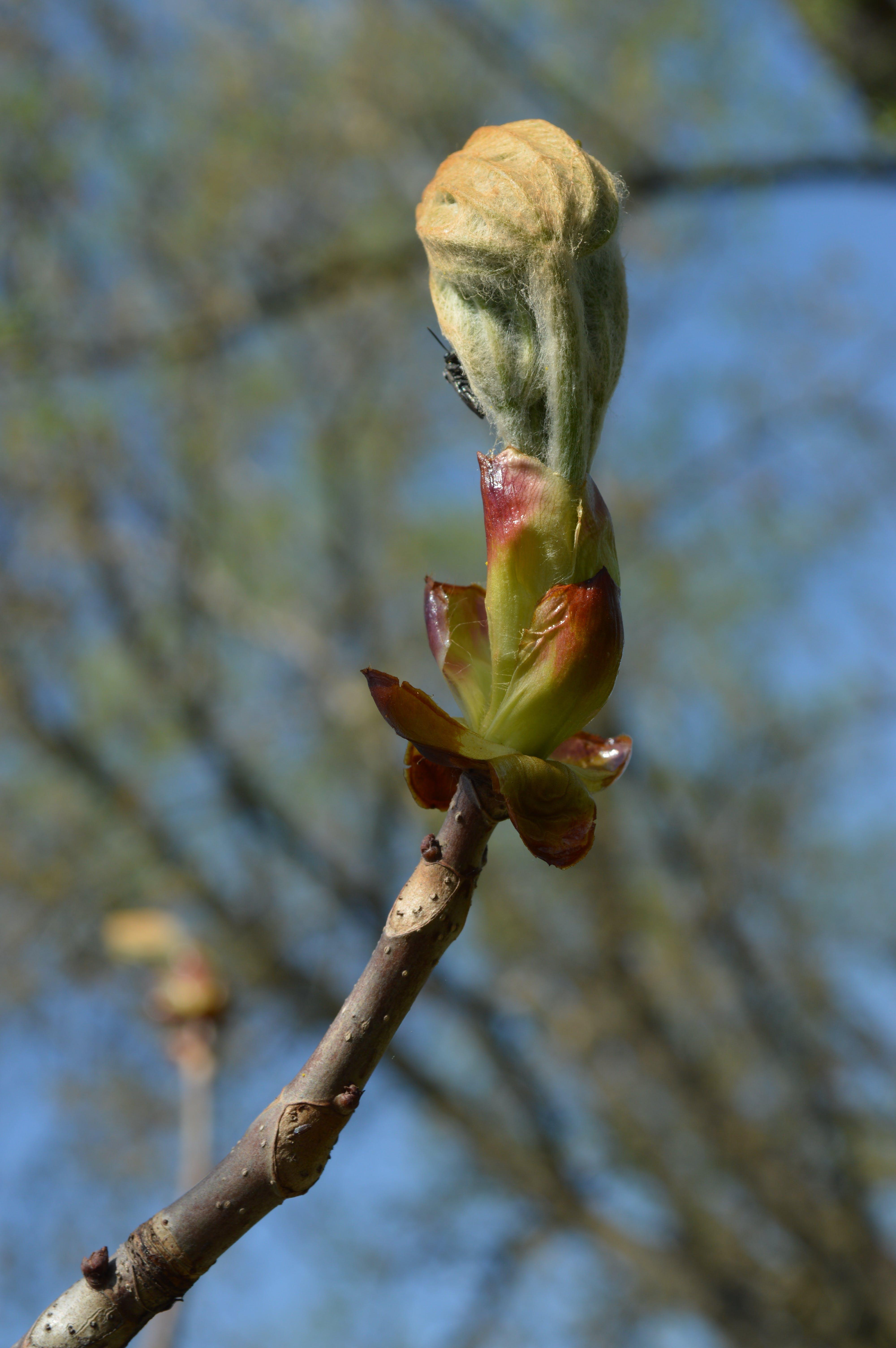 Free stock photo of распускаются листья, весна, ветка