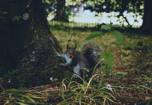 Fotobanka sbezplatnými fotkami na tému cicavec, denné svetlo, hlodavec, park