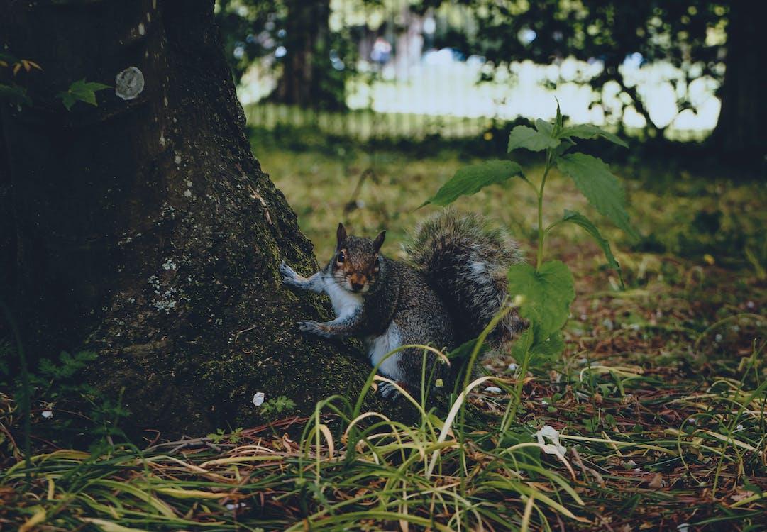 公園, 動物, 可愛
