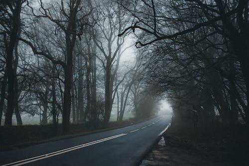 Foto d'estoc gratuïta de alba, amb boira, arbres, boira