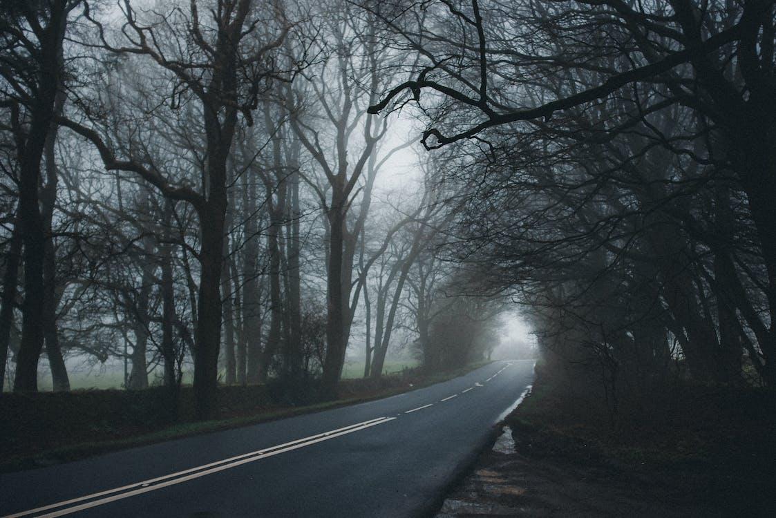 długi, droga, drzewa