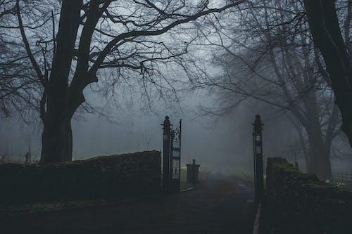 Imagine de stoc gratuită din arbori, ceață, cețos, crengi