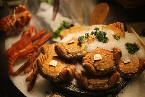 Gratis lagerfoto af krabbe