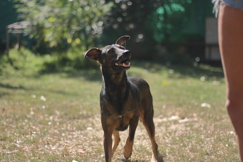 Free stock photo of animal, animals, dog, dogs
