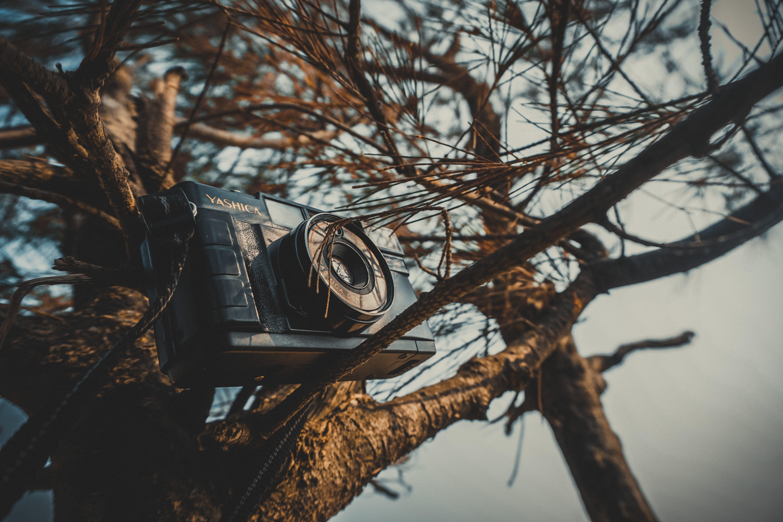 Black Mirroless Camera on Tree