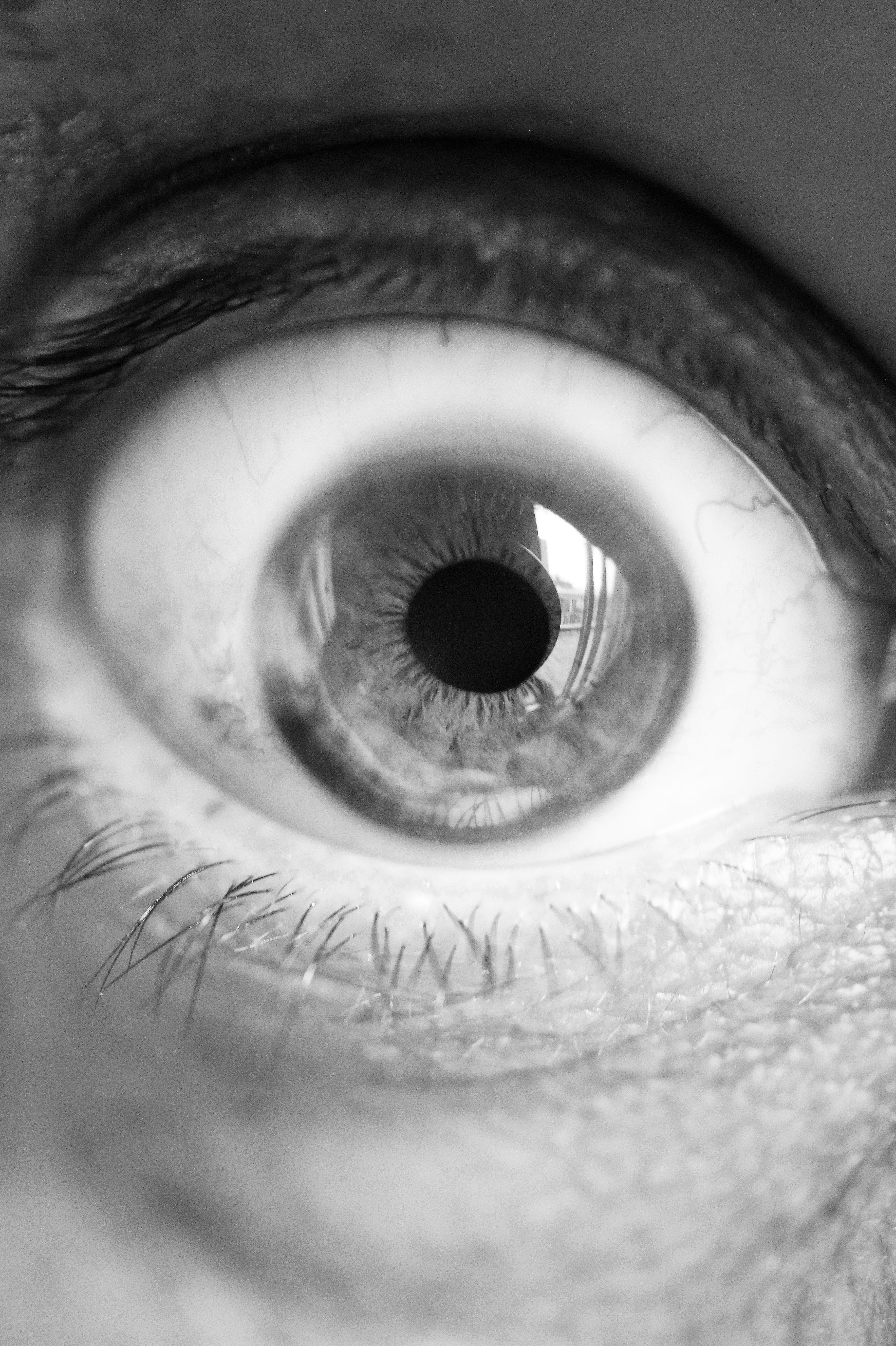 Immagine gratuita di bianco e nero, occhio, primo piano, visione