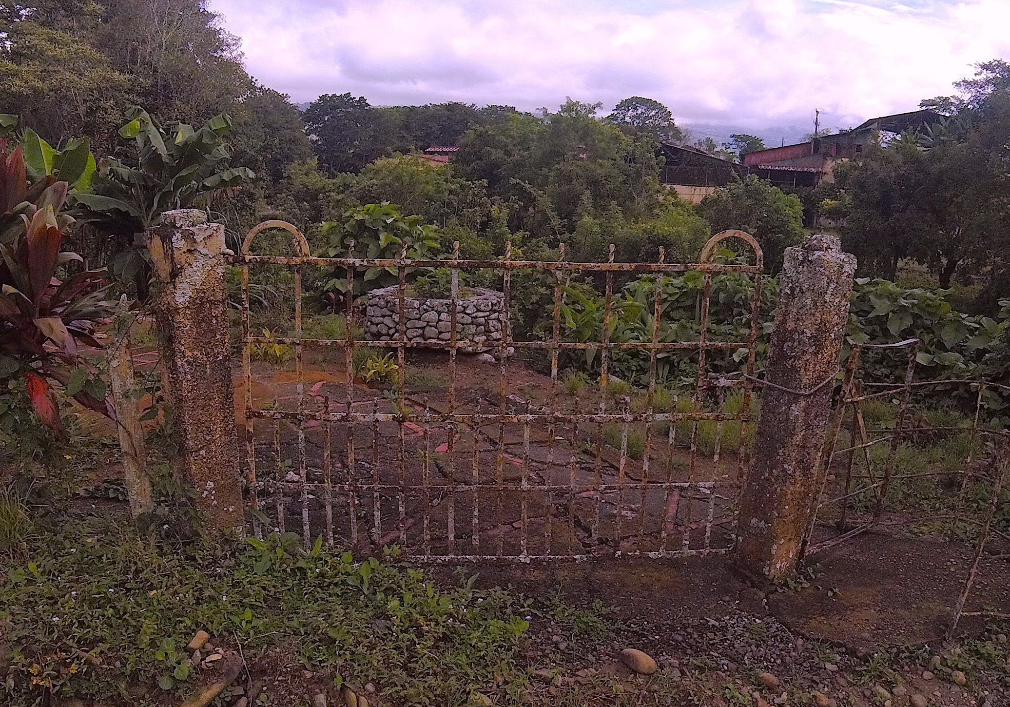 Free stock photo of nature, rust, plants, gate
