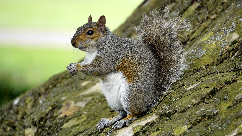 Squirrel on Trunk