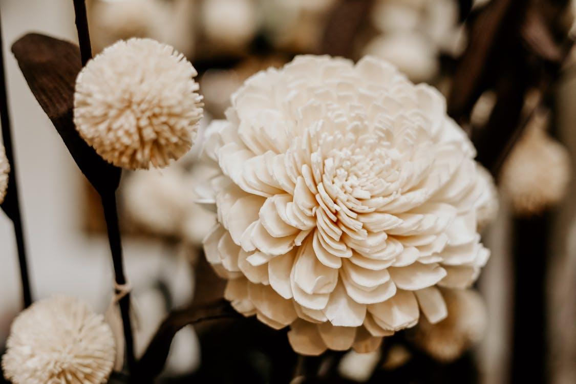 alb, antichitate, creștere